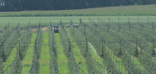 NA NEDĚLI: Představuje nejmodernější zemědělskou techniku