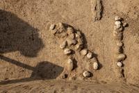 Jak lze datovat uhlík-14 k dnešnímu dni mumifikovaného mamuta