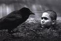 Přebal knihy Nabarvené ptáče.