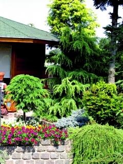 Konifery aneb jehličnany v zahradě