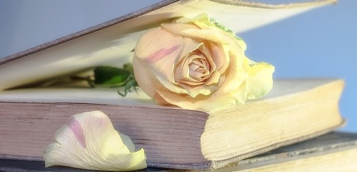 Randění růží