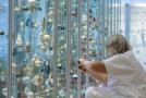 Pracovnice Muzea skla a bižuterie v Jablonci nad Nisou instaluje 19. listopadu 2019 výstavu současných českých vánočních ozdob.
