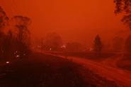 Požáry v Austrálii ohrožují vzácné živočichy