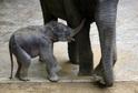 Sloni v pražské zoo.