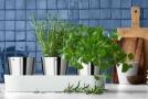 Osvětlené bylinkové zahrádky aneb zahradničení budoucnosti.