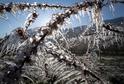 Mráz zničil květy ovocných stromů.