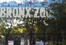 Newyorská zoo.