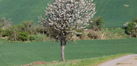 Některé stromy letos nepřežijí.