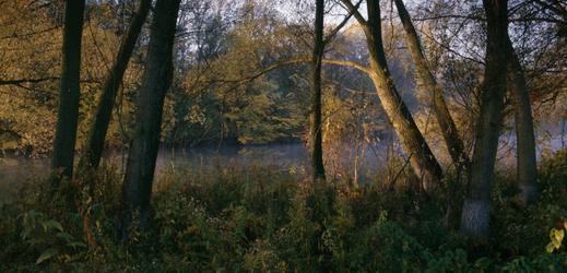 Odborníci chtějí důslednější ochranu lužních lesů u Dyje