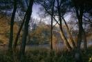 Lužní lesy podél dolních toků řek Moravy a Dyje.