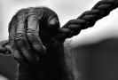 Ugandští pytláci zabili samce gorily horské, hrozí jim doživotí.