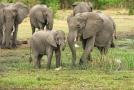V Botswaně přibývá mrtvých slonů, příčina není jasná.