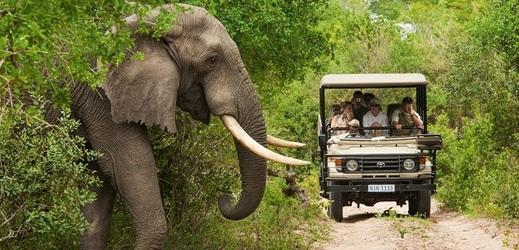 Jihoafrická fauna.