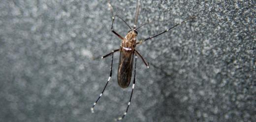Kvůli přemnoženým komárům prodejci evidují větší zájem o repelenty