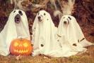 Letošní halloween bude hodně jiný.