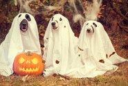 Cukrovinky z trubky, zákaz ječení a koledování na některých místech, takový bude letošní Halloween