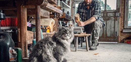 Kočka jako neocenitelný pomocník správného kutila.
