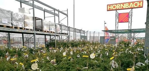 Hornbach nabízí široký výběr vánočních stromků.