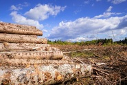 Obce získají na pomoc proti kůrovci a pohromám až 640 milionů korun