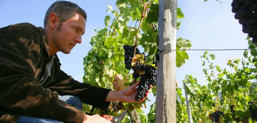 Svaz vinařů: Na víno se kvóta pro obchody nevztahuje, byl by to problém
