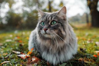 Blechy mohou od psů chytit i kočky.