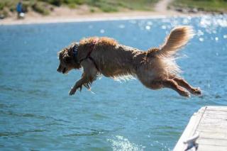 Jako pes ve vodě.