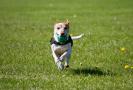 Míčky - nejoblíbenější hračky pro psy.