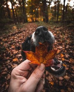 Podzim pod psa.