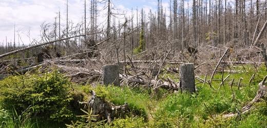 Les poničený kůrovcem.