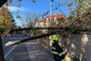 Silný vítr lámal stromy (Praha 21. 10. 2021).