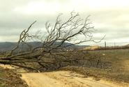 Ředitelství dálnic je obžalováno v případu úmrtí řidiče na Českolipsku, jehož zabil strom