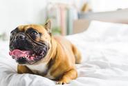 Chovatelé zvířat na rozmnožování budou muset mít minimálně 15 m2 na prvního psa