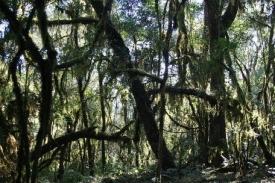 Panenský tropický prales v Baritú.