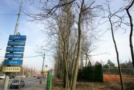 Pokáceny by měly být i stromy lemující ulici Milady Horákové