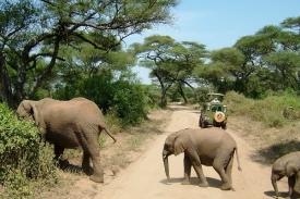 Slonům je lepší dát přednost.